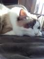 cat2014010104.jpg