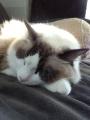 cat2014010106.jpg