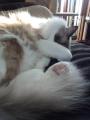 cat2014010108.jpg