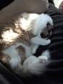 cat2014010109.jpg
