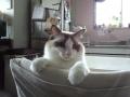 cat2014012700.jpg