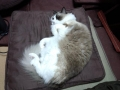 cat2014020100.jpg