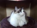 cat2014020101.jpg