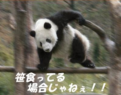 tumblr_kvgy4zMdpn1qz6nqfo1_400.jpg