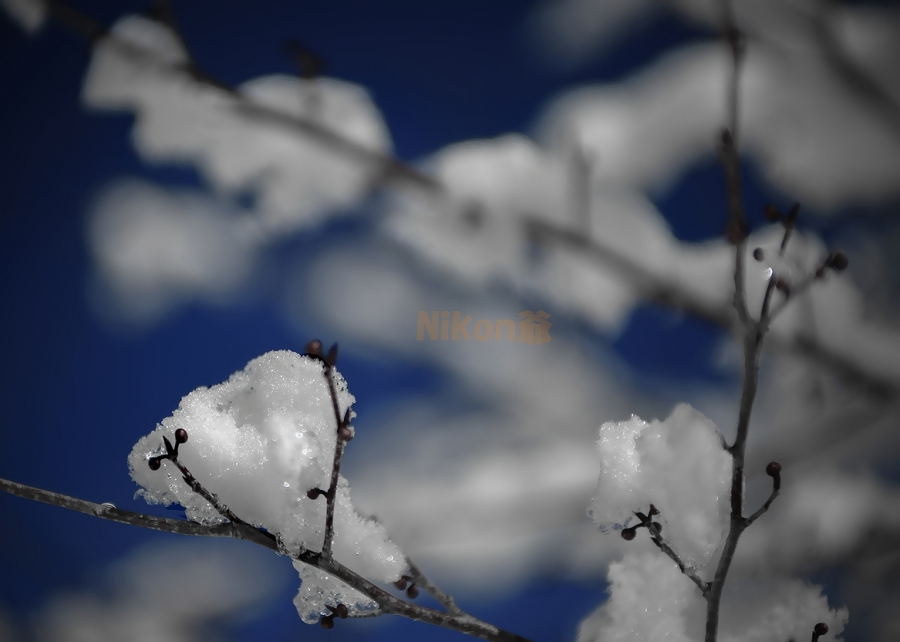 2013 12 30  忍野雪の花 D3x (65)SS