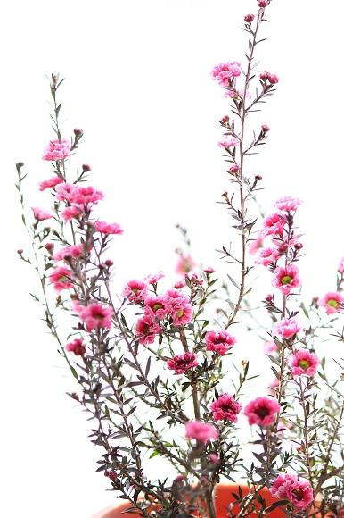 観葉植物ー4-2