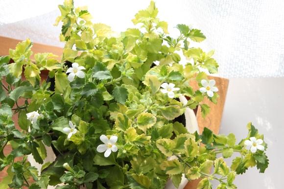 観葉植物ー4-5
