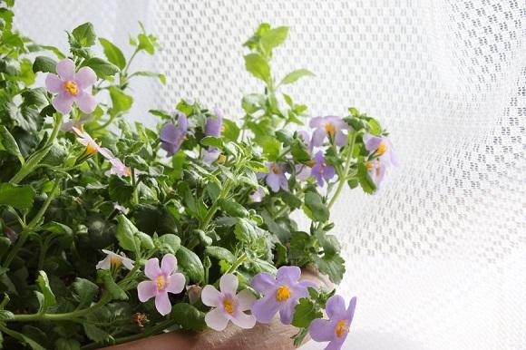 観葉植物ー4-6