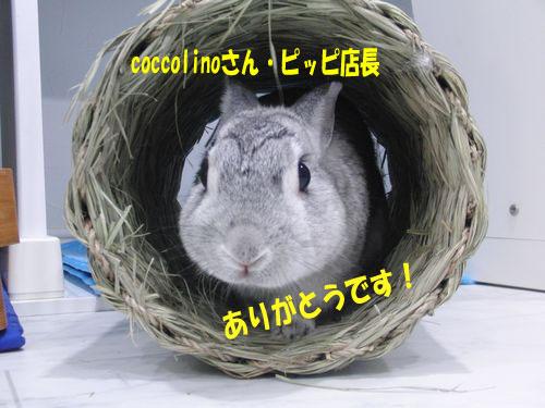 CIMG6305.jpg
