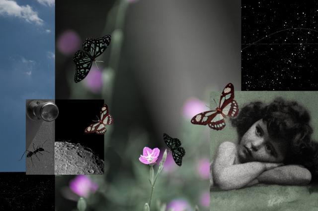 1-coll-butterfly_effect-t.jpg