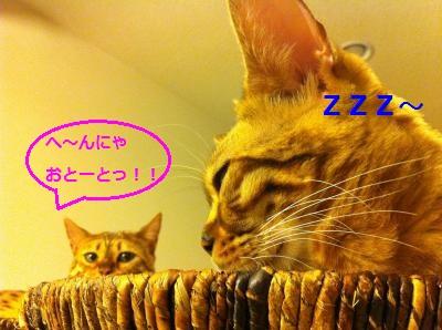 mimo_20111221131822.jpg