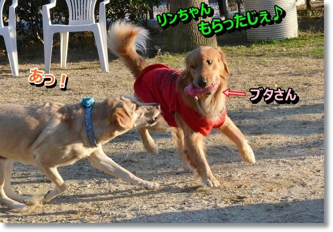 DSC_2271_20130129021218.jpg