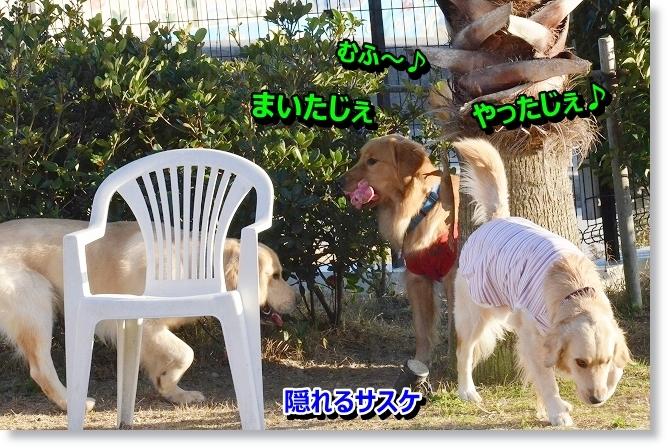 DSC_2285_20130129021248.jpg