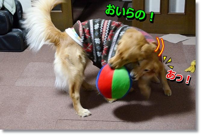 DSC_4858_20130119175356.jpg