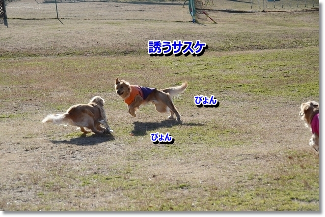 DSC_5611_20130222190302.jpg