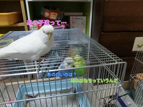 お披露目③