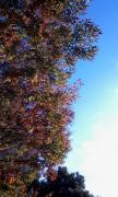 秋の空20111031