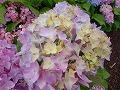 CIMG5461_20110601183339.jpg