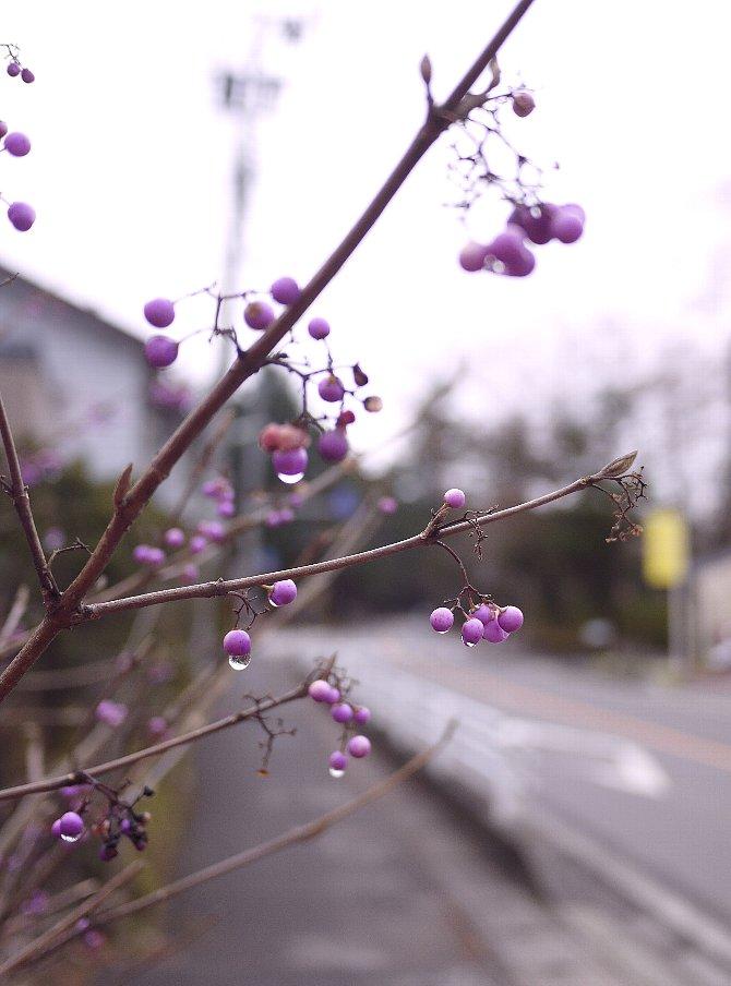 軽井沢の路上より