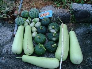 収穫22080701