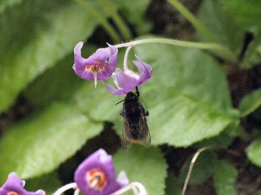 ハチ20130608