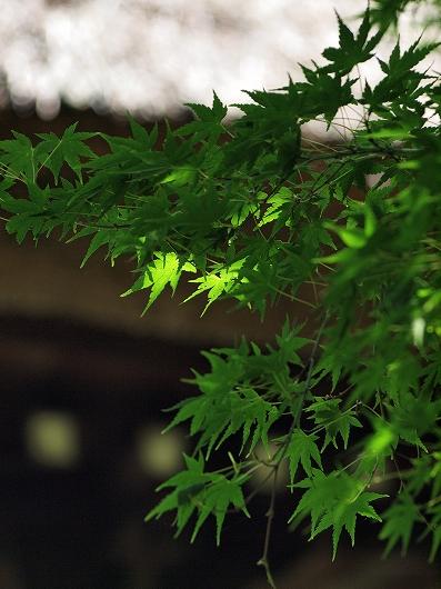 新緑2-20130608