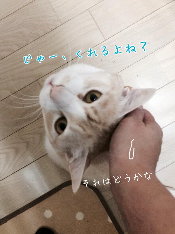 20141111194757acd.jpg