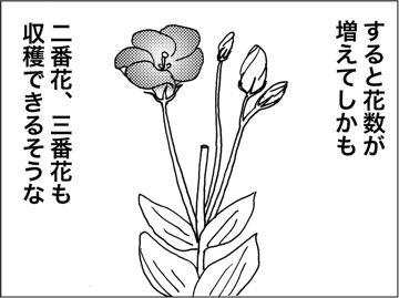 kfc00132-6