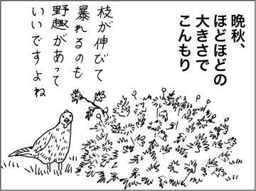 kfc00154-8