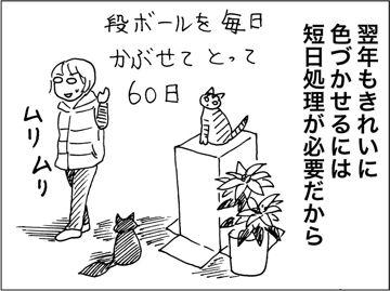 kfc00157-3