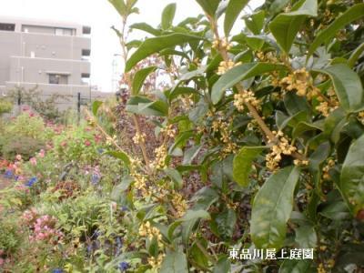 kimoku1.jpg