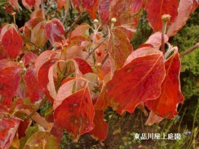mizuki2_20131025154543243.jpg