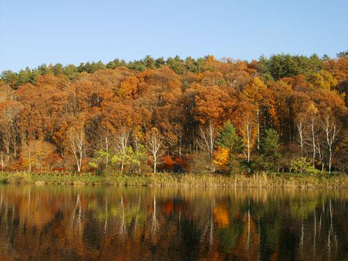 湖面にうつる紅葉