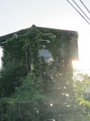 マゾーンに侵略された家