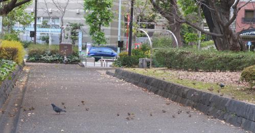鳩とスズメ