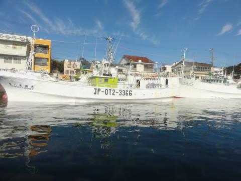 勝浦港のまぐろ漁船団