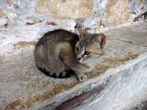 ミストラの猫さん
