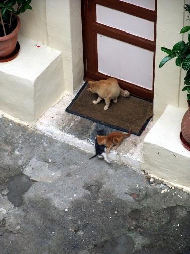 ミストラの猫さん (2)