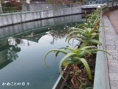 P1060642^-river