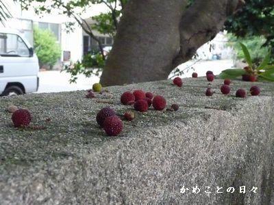 830b8dcc8.jpg