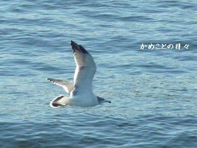 P1010844-bird.jpg