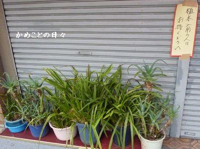 P1020419-ueki.jpg