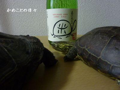 P1040528-sake.jpg