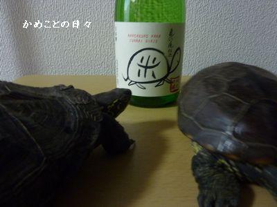 P1040529-sake.jpg