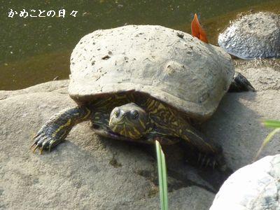 P1050144-hurukawa23.jpg