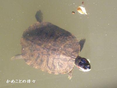P1050189-hurukawa21.jpg