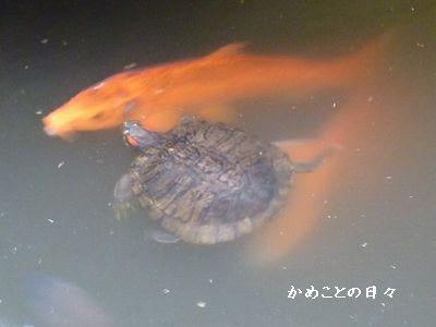 P1050218-hurukawa22.jpg