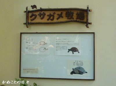 P1050739-kusa1.jpg