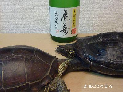 P1050818-sake.jpg