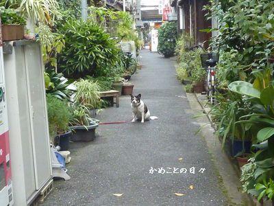 P1050895-tukisima1.jpg